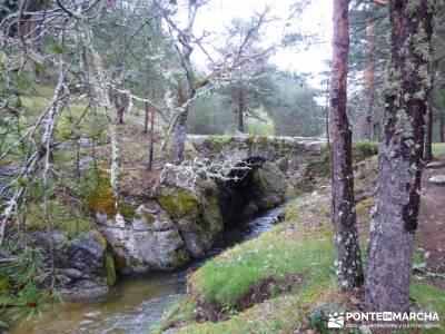 Tejos Milenarios de Valhondillo -Tejos de Rascafría; turismo activo madrid;senderismo y excursiones